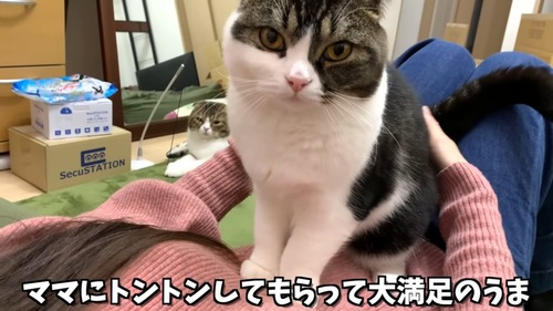 人のお腹の上に座る猫