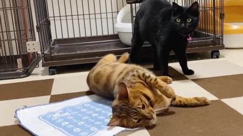 寝転がる猫と立っている黒猫