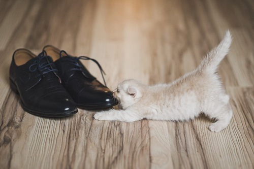 くつにかじりつく子猫
