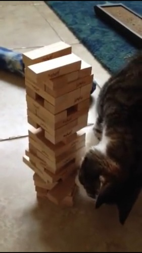 ジェンガを動かす猫