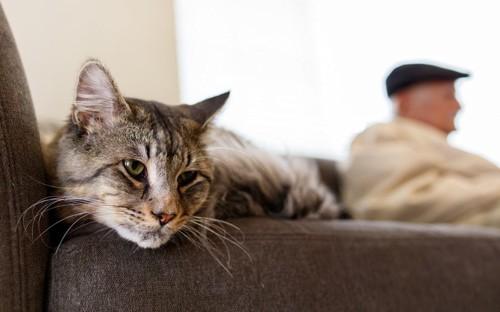 不満げな猫と男性のシルエット