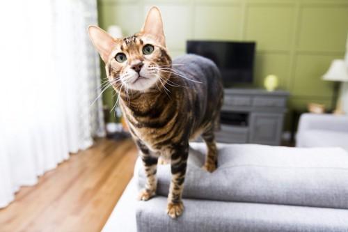 ソファーの上にいる猫