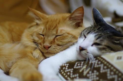 寄り添って眠る二匹の猫