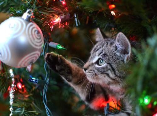 ツリーの飾りに手を伸ばす猫