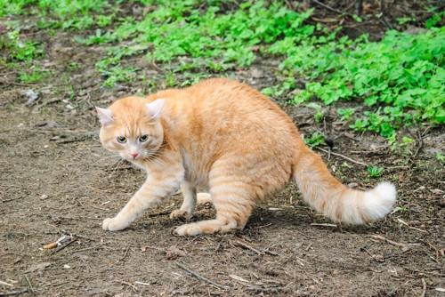 警戒して毛を逆立てる猫