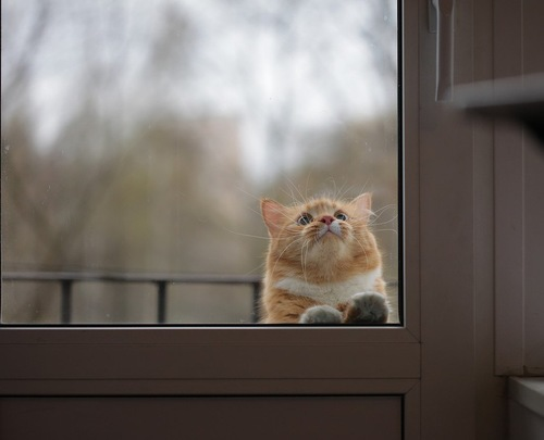 外に出された猫