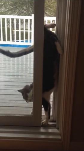 前足を入れる猫