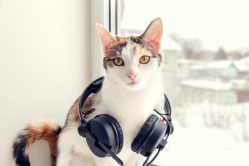 ヘットフォンと猫