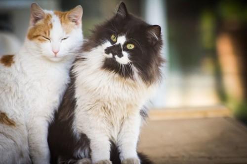 寄り添う猫たち