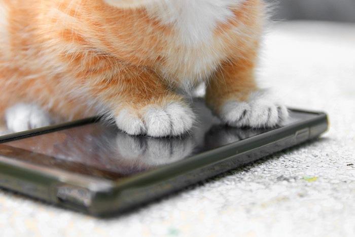 スマホと子猫の足の写真