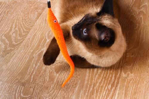 オレンジのおもちゃと猫