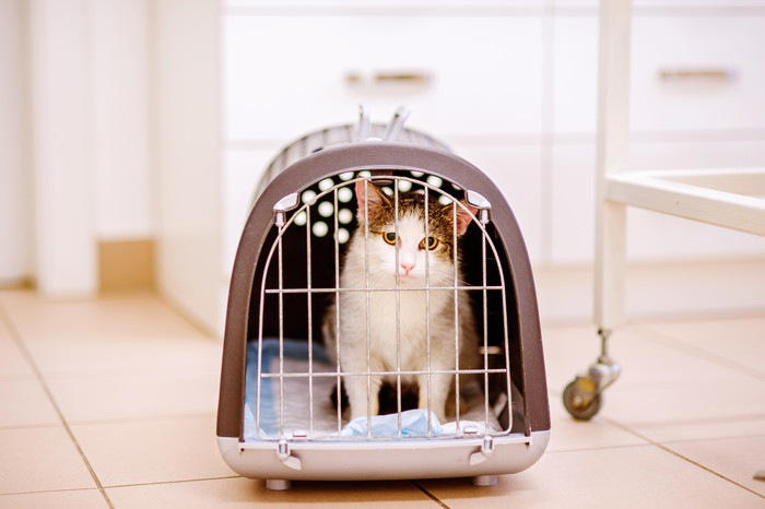キャリーに入っている猫の写真