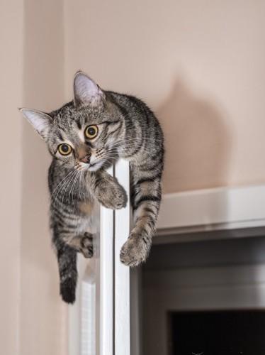 扉の上に登って困る猫