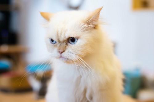 視線を逸らす不機嫌な猫