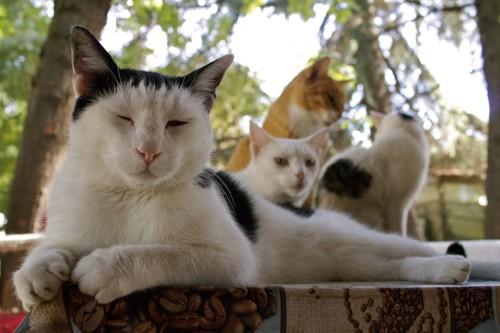 日陰に集まる猫たち