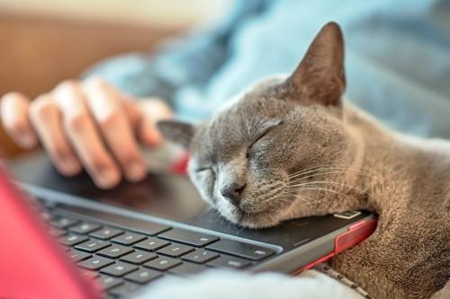パソコンに頭を乗せる猫