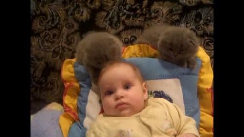 お姉さんぶる子猫