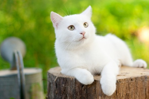 切り株に座る白猫