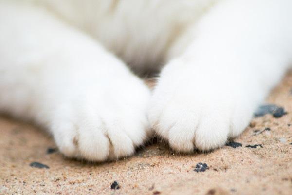 白い猫の手アップ