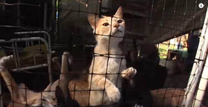 多数の猫が入れられた猫小屋