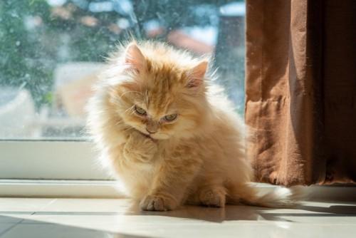窓際の子猫