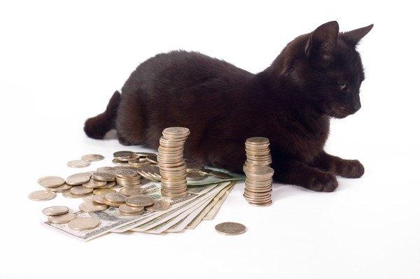 紙幣と小銭と黒猫