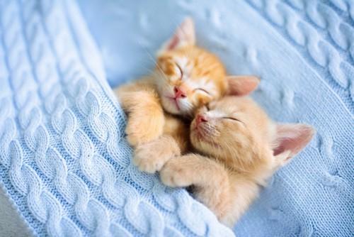くっついて眠る子猫