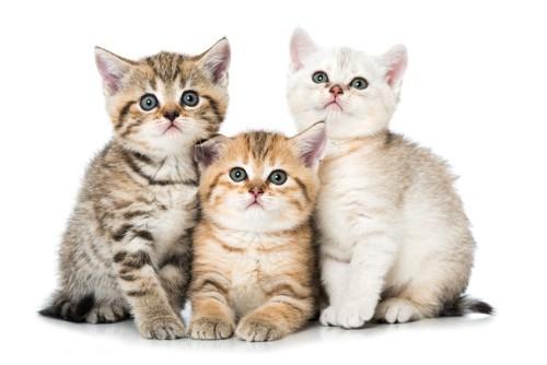 座っている3匹の猫