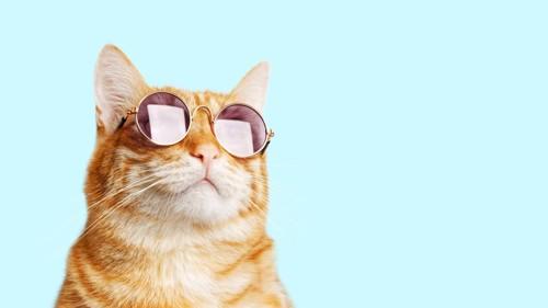サングラスと猫