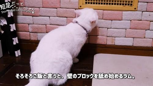 壁の方を向く猫