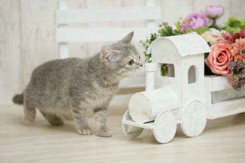 木の車の匂いを嗅ぐ子猫