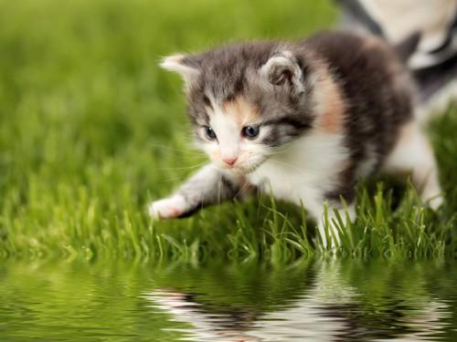 水辺の子猫