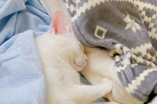 リラックスして寝ている猫