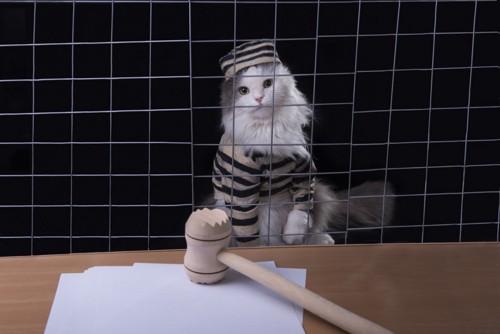 網越しの猫