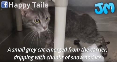濡れた子猫