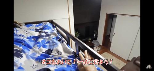 二段ベッドから猫を見下ろす