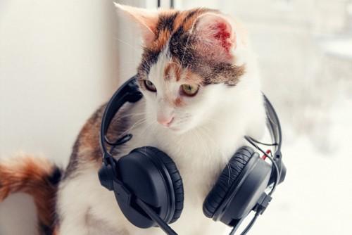 ヘッドフォンをつける猫