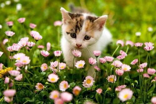 花の中の子猫