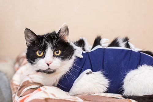 術後服を着ている猫