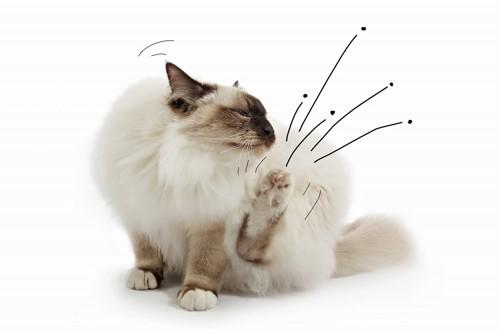 ノミが寄生している猫のようす