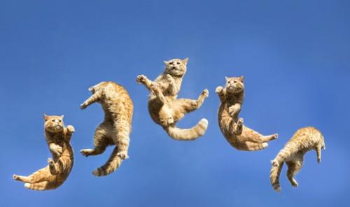 空中で浮いている猫