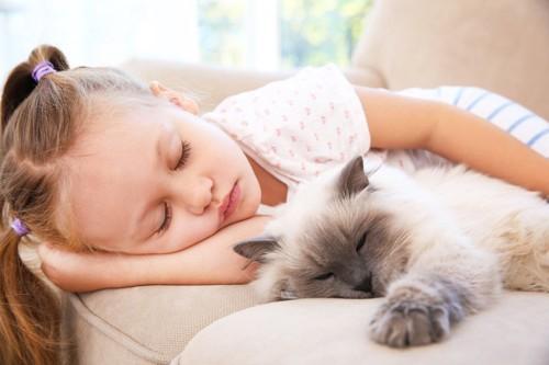 猫と一緒に寝ている少女