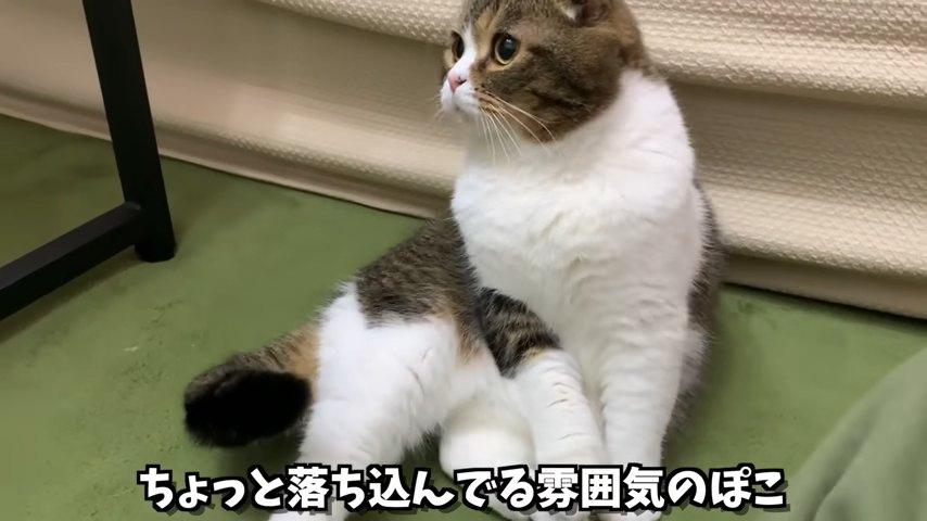 横座りする猫