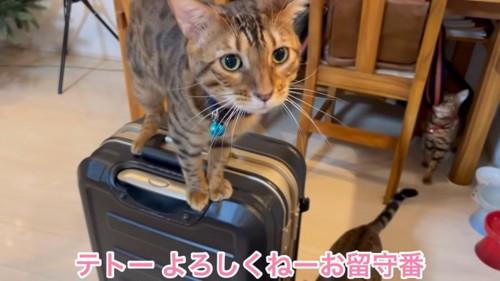 スーツケースに乗る猫