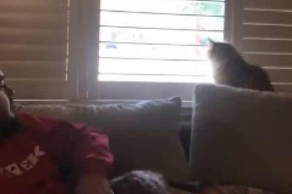窓辺で外を眺める猫