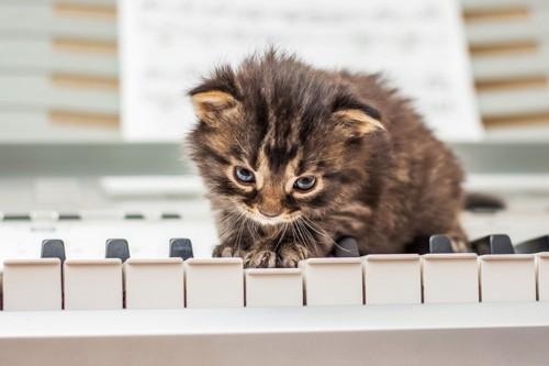 ピアノの上にいる猫