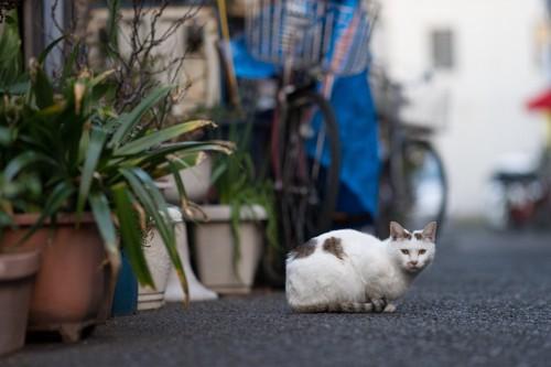 知らない街と猫