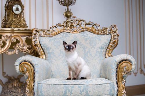 立派な椅子の上の猫