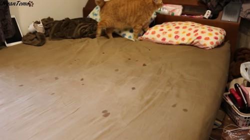猫のヨダレで汚れたベッド