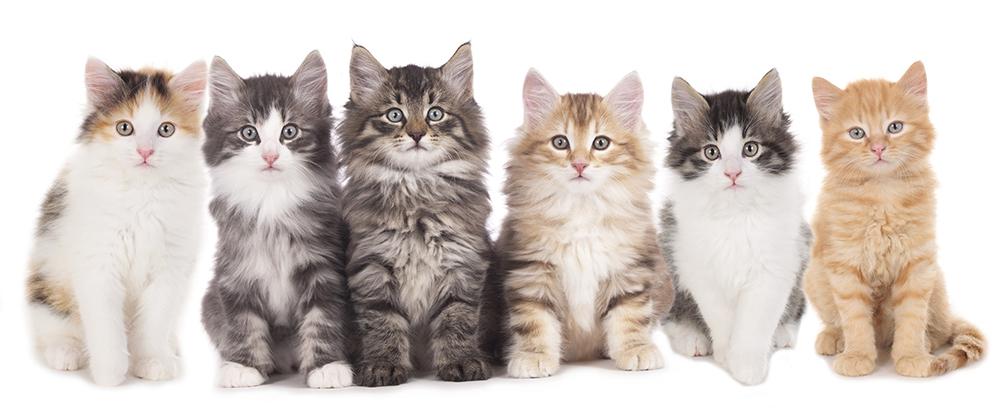 猫のジャンプ力のルーツ